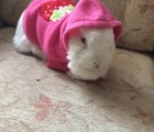 Sparkle the Rabbit