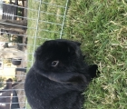 Marley the Rabbit